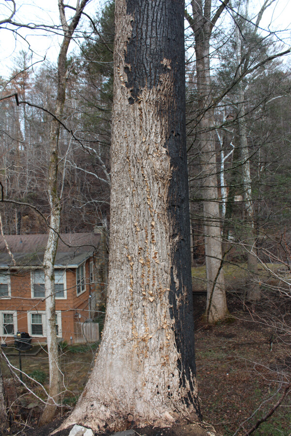 Tree next to church site